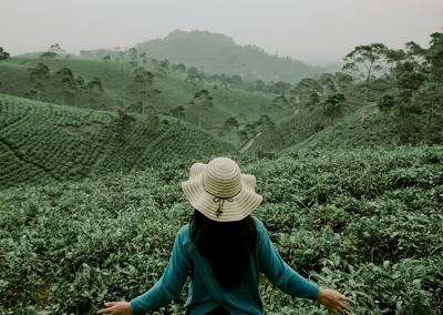 woman overlooking plantation fields