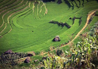 Sa pa, Vietnam by  Siamak Djamei for Unsplash