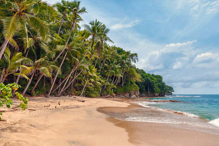 Sri Lanka beach with sand and palm trees
